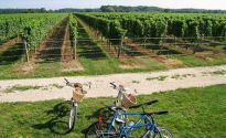 New York Day Trip: The wine country of North Fork, Long Island