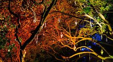 London: The Enchanted Woodland offers a wintery escape, Nov 19-Dec 5
