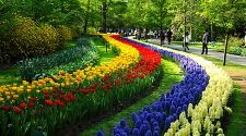 Keukenhof: A sweet-smelling daytrip from Amsterdam