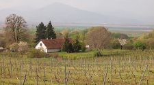 Visiting Slovakia's affordable wine region: Sipping, savoring and sleeping for €25 per person