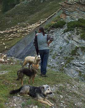 Shepherd in the French Alps