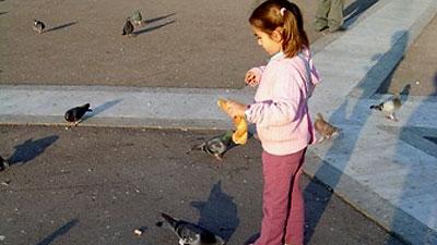 Here, pigeon