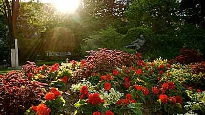 Still jardin