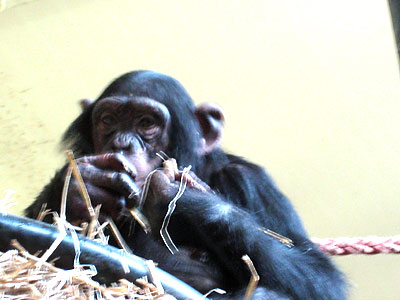 Amsterdam monkey