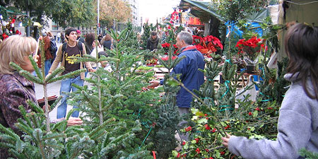 Buying trees at Barcelona's Christmas Market. Photo by Anna Champel.