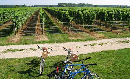 Vineyards, North Fork, Long Island