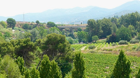 The cava-producing vineyards of Sant Sadurni. Photo: JaulaDeArdilla