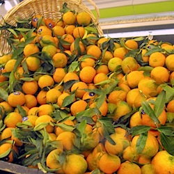 Clementines Paris