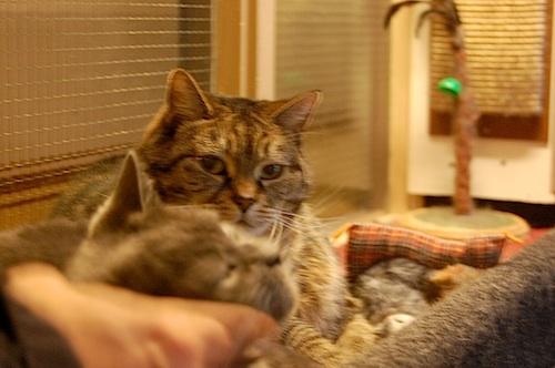 Nadia Hotel cats