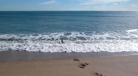 The attractive Barcelona beaches are still free to enjoy. Photo: Regina W Bryan