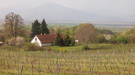 Slovakia Tokaj region