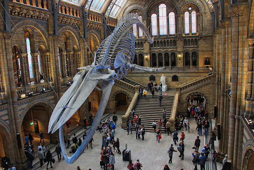Museum Of Natural History London Address