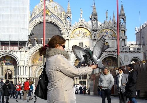 San Marco Venice birds